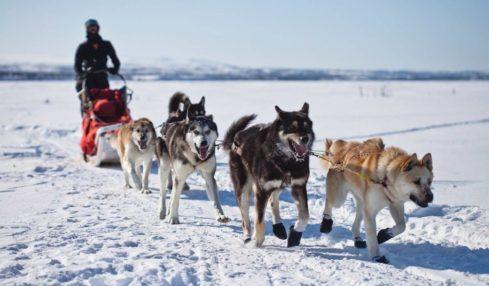 laponia granja de huskies